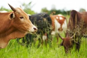 Вологодские сельхозпредприятия могут получить грантовую поддержку от государства